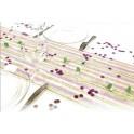 Chemin de table intissée 0.30x5m rayé fuchsia